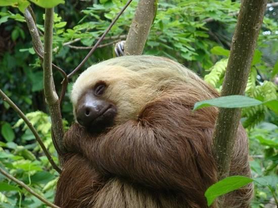 oso perosozo animal de la selva de brasil